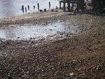 лебеди спят на пляже