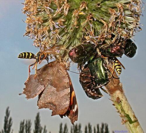 1 Н _ К.П.Махотина_ Как много в мире насекомых, друг на друга не похожих!.jpg