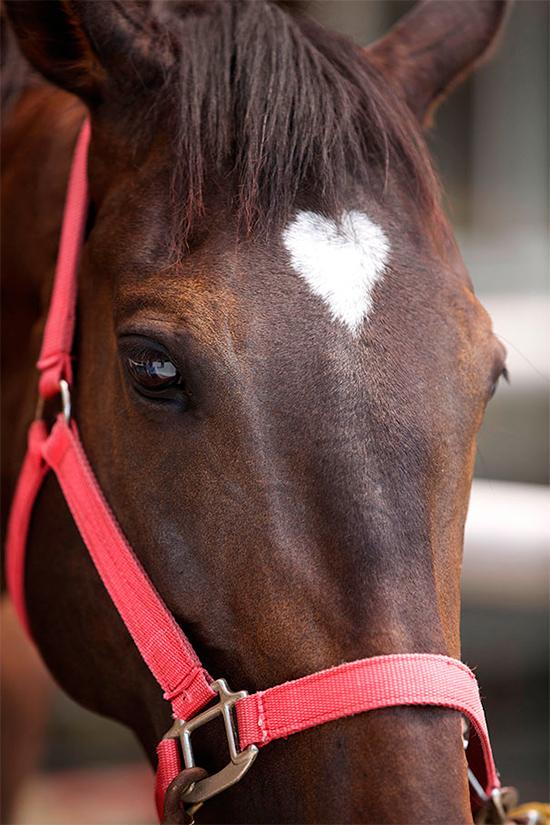 Фото спортивный конь