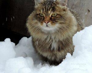 Зима Тёма
