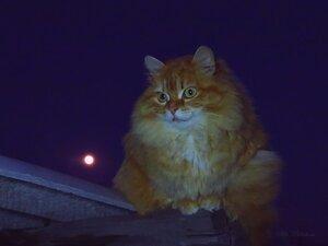 Луна и Солнышко