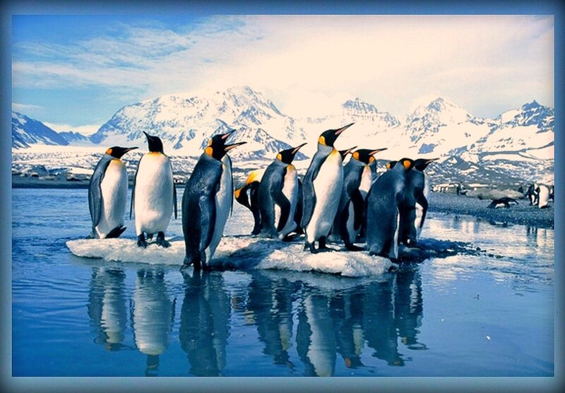 Пингвины (10).JPG