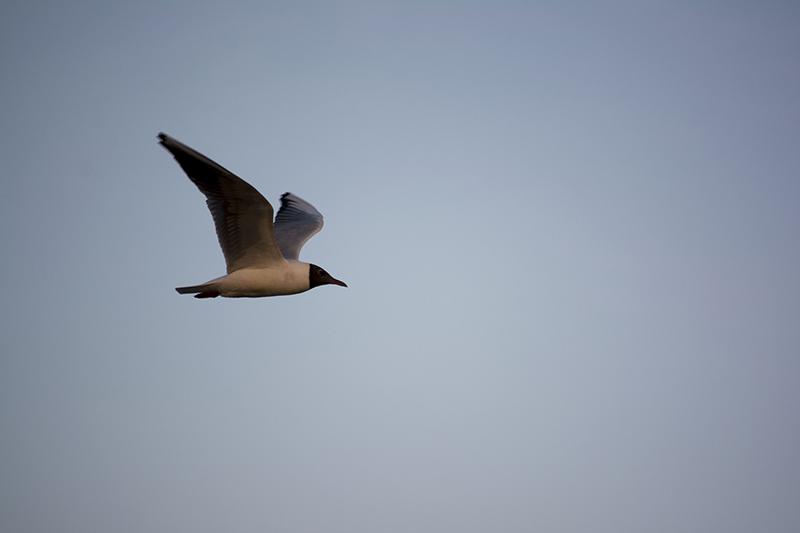 сумерки над Волгой чайка