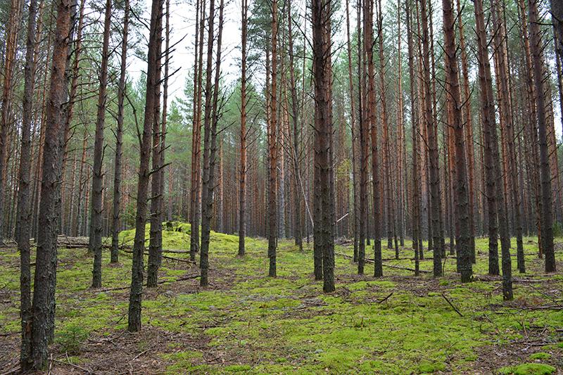 осень 15 лес4