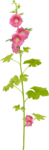 Girl-s_Garden_Lilas_ele (89).png