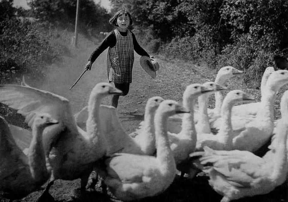 1942. Маленькая девочка с гусями