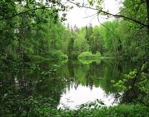 Озёрко в лесу