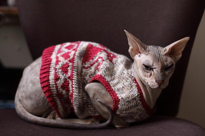 Не, не понимаю.  ПОчему считается, что сфинкс -это красиво.  Тут одна выложила свое несчастнео животное в одно из...