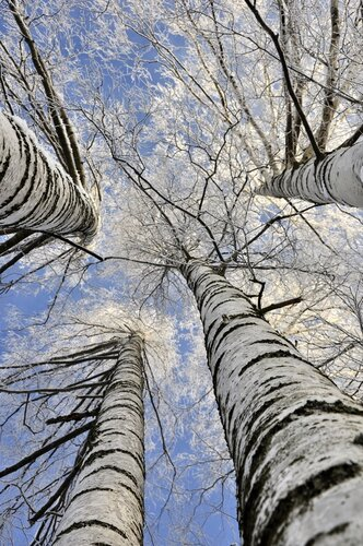 http://img-fotki.yandex.ru/get/5107/tsazhin.3f/0_4e82c_cfe0abd7_L.jpg