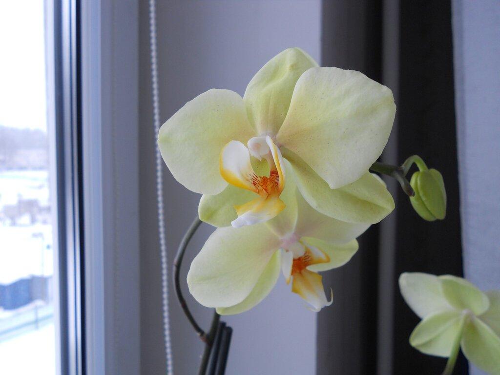 Орхидея 1024х768