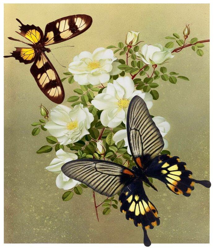 Descarga gratis fotos de mariposa collage