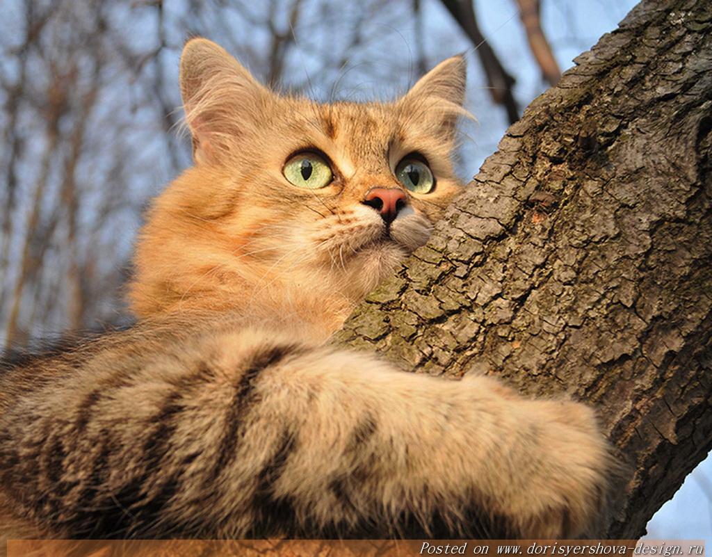 кошки, осень, листья, осенние