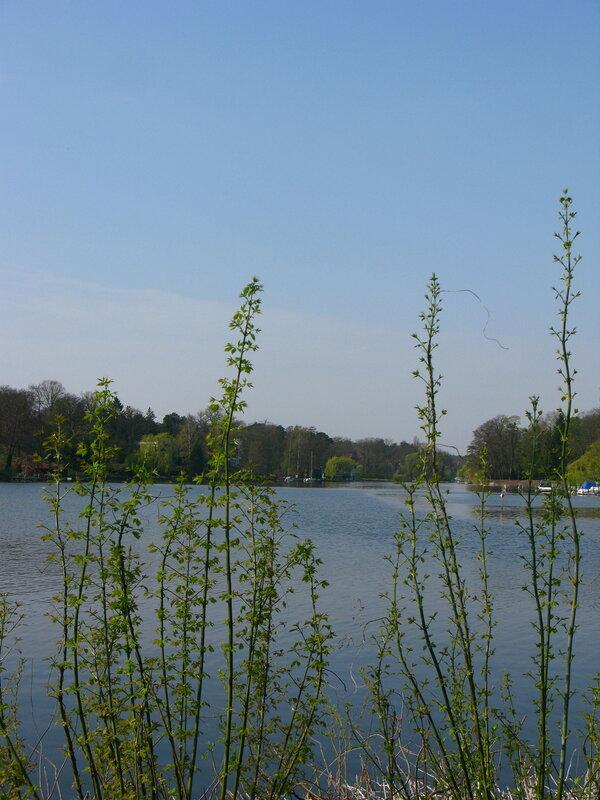 Весенняя зелень у Ванзее