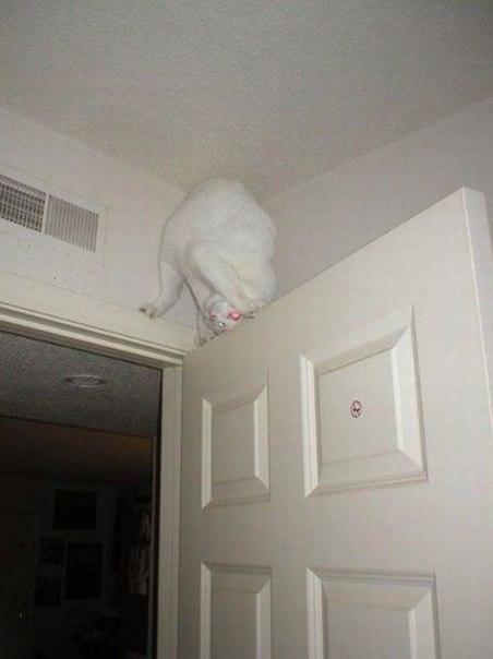 смешные картинки кошка кунг фу
