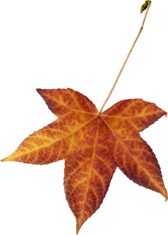 Carena_Autumn Crunch_67.png