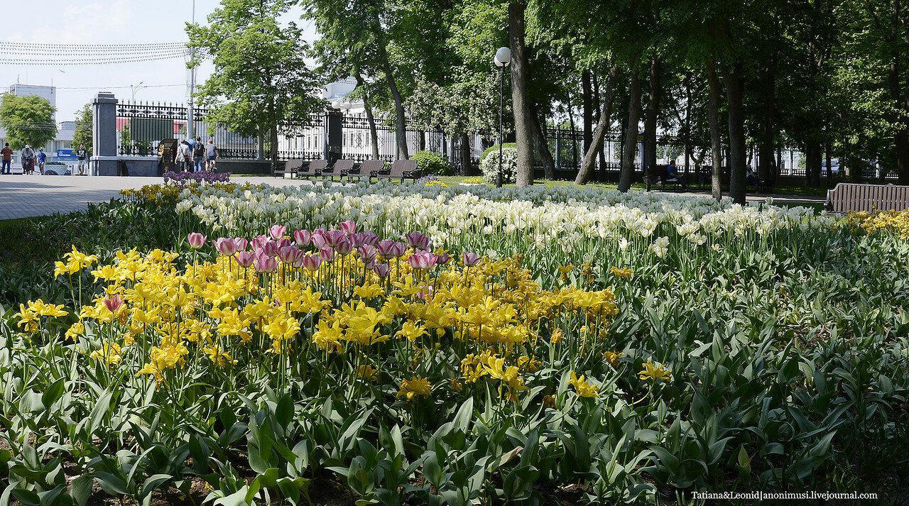 Тюльпаны в парке Румянцевых и Паскевичей. Гомель