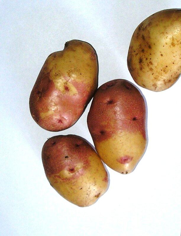 Картошка кофта юбка
