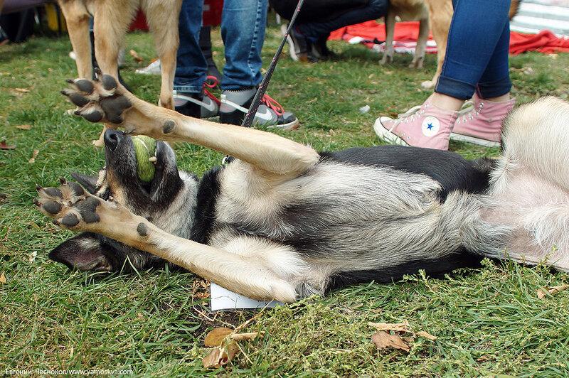 Осень. Фестивальный парк. Собаки. 04.10.14.24..jpg