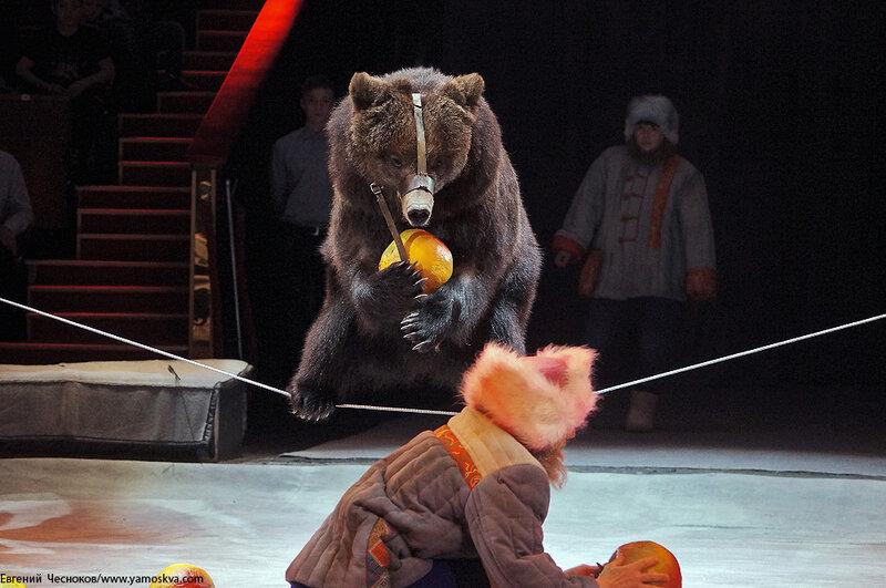Весна. Цирк. 13.Медведь. И.Климентьев. 21.03.15.03..jpg