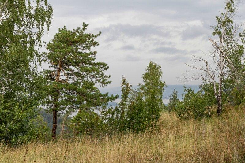 Растительность, Жигулевские горы
