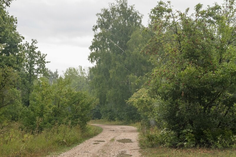 Дорога, Жигулевский заповедник