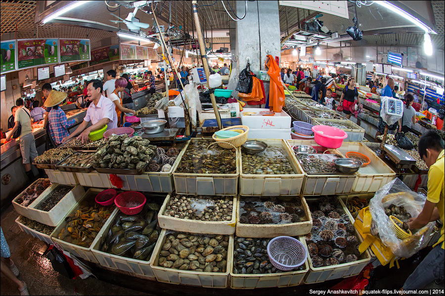 Рынок морских гадов