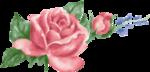 rosenrosa001.png