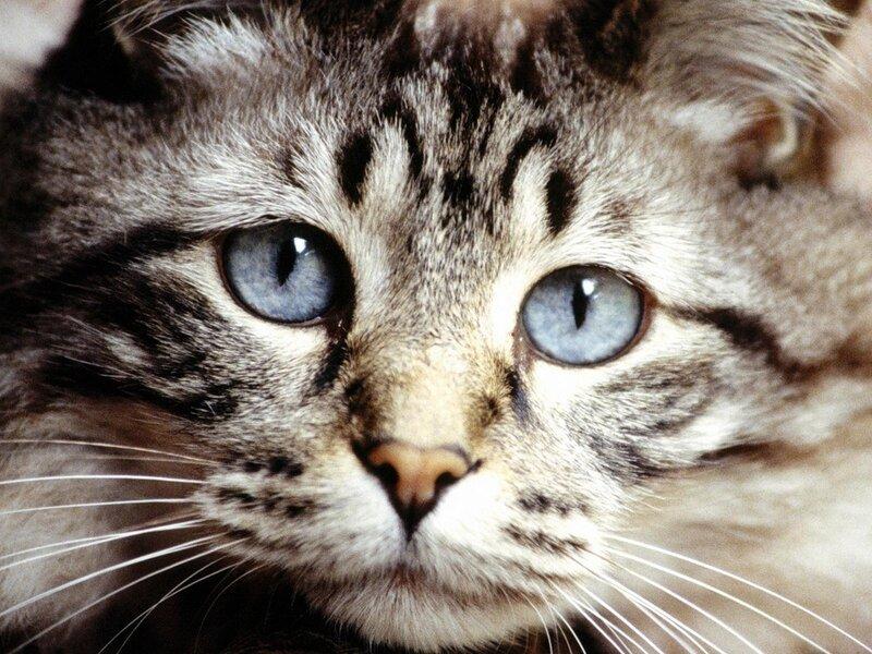 Кошка способна видеть все по бокам , ведь её зрительное поле 287...