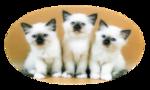 Кошки 5 0_50a02_6a4c9622_S