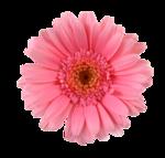 «ZIRCONIUMSCRAPS-HAPPY EASTER» 0_54177_f229b656_S