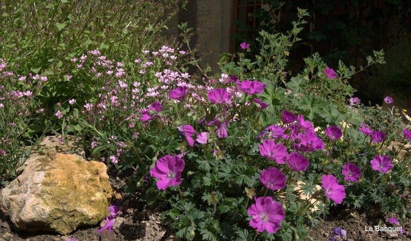 И заброшенные Сады красивы