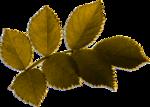 MLT_leaves3_JD-copie.png