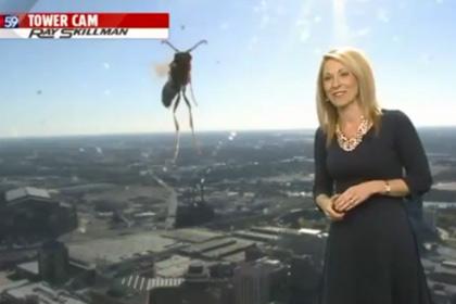 Американская телеведущая из-за пчелы сбежала из эфира
