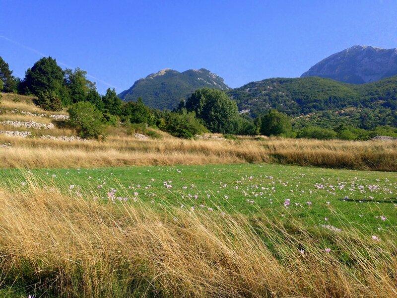 крокусыв Черногории летом