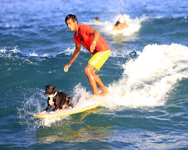 Соревнования собак