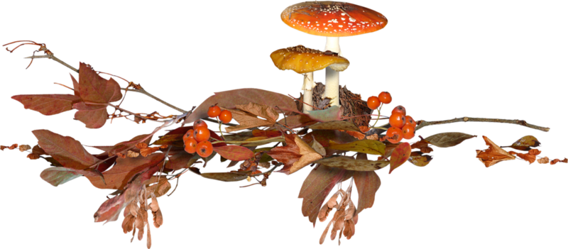 Carena_Autumn Crunch_Cluster 2.png