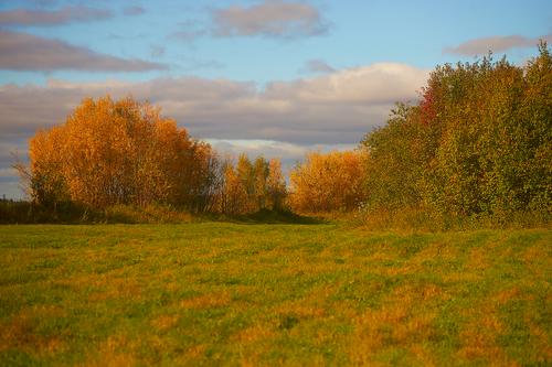 Осень..
