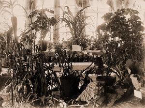 Вид части экспонатов по огородничеству.