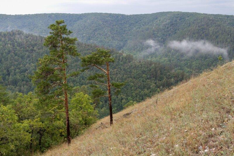 Две сосны, гора Стрельная, Жигулевские горы