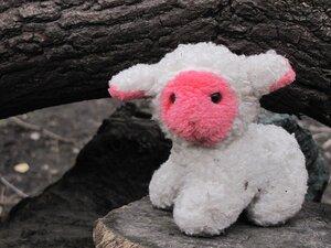 Заблудшая овечка