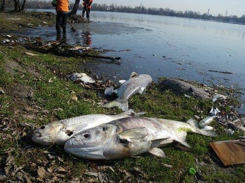 На Сахалине не знают, как бороться с заморами на реках
