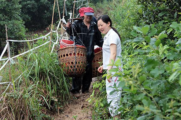 Сборщики урожая ягоды в Китае