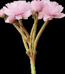 bee_floral_el9.png