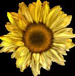Flores (1).png