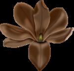 Flores (3).png