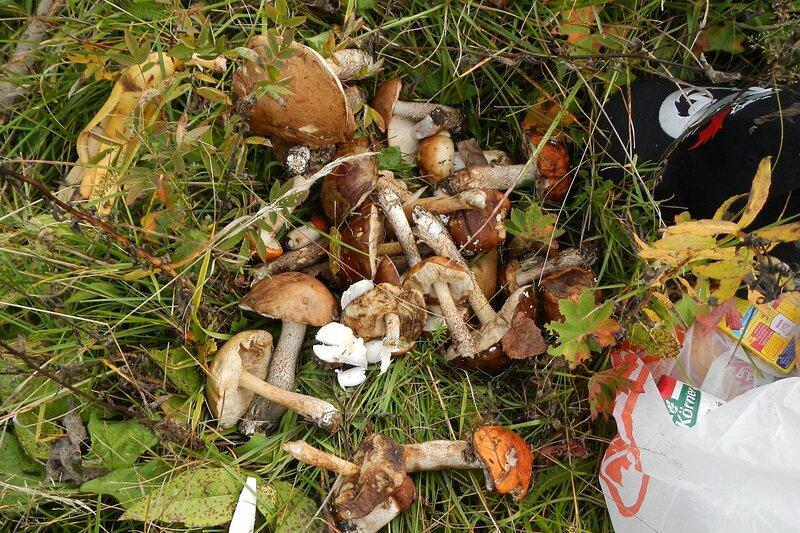 часть собранного урожая грибов