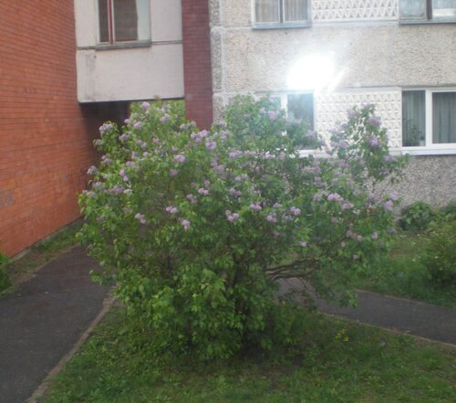 http://img-fotki.yandex.ru/get/5110/anton-liliya.9/0_5b2e3_d30d2d14_L.jpg