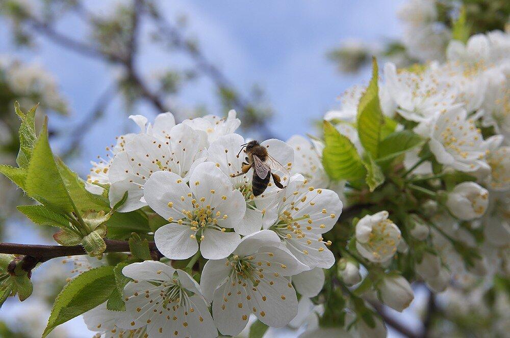 Весна 2