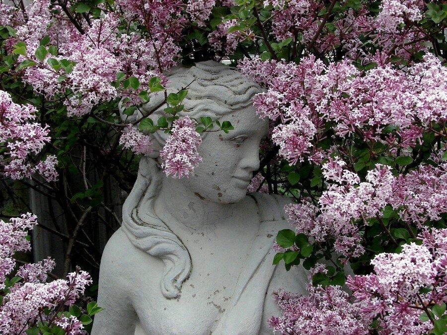 Цветы фото весенних цветов