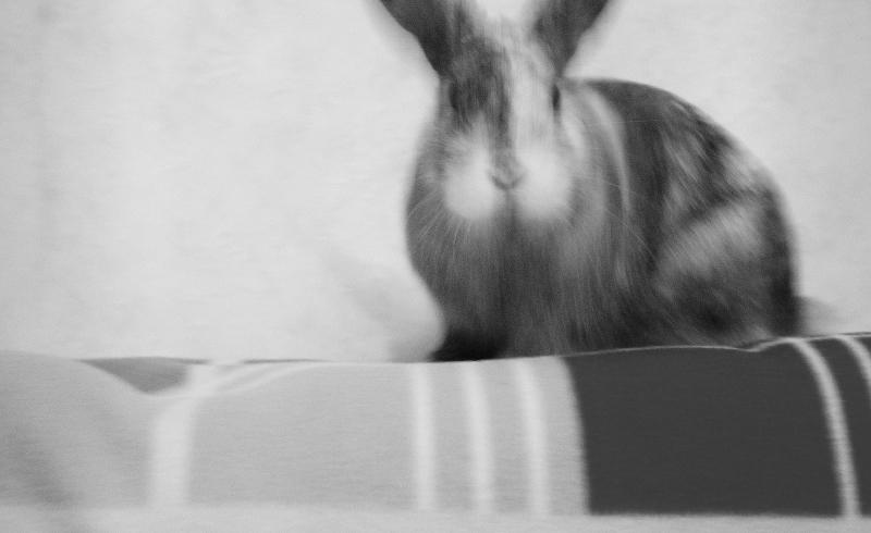 серые кролики фото